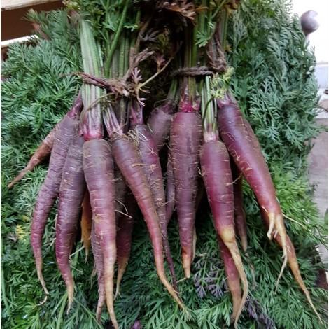Био моркови лилави  връзка | Моравско село