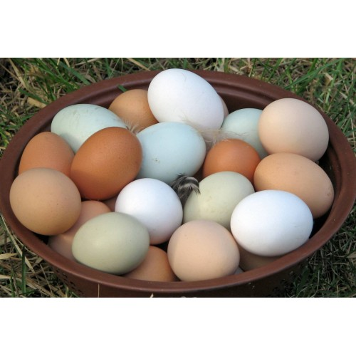 Домашни Кокоши яйца | Моравско село | moravskoselo.bg