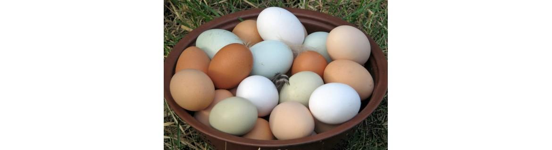 яйца Моравско село